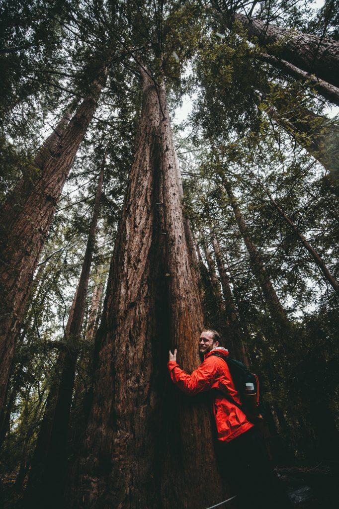 Calins aux arbres